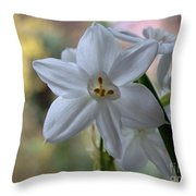 White Narcissi Spring Flowers 3 Throw Pillow