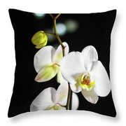 White Orchid On Black Bw Throw Pillow