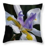 White Orchid With Yellow And Purple Throw Pillow