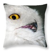 White Owl Throw Pillow