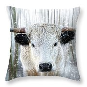 White Park Cattle In The Snow Throw Pillow