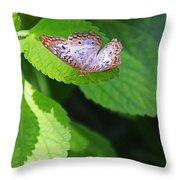 White Peacock Butterfly II Throw Pillow
