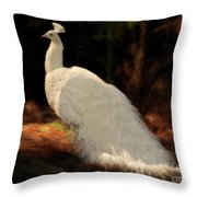 White Peacock In Golden Hour Throw Pillow