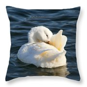 White Pekin Duck In Blue Water Preening Throw Pillow