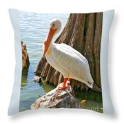White Pelican By Cypress Tree Throw Pillow