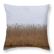 White Pelicans Fly Over Reed Bed On Lake  Throw Pillow