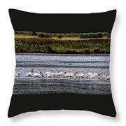 White Pelicans Kootenay Lake Throw Pillow