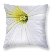 White Petunia Wall Art Throw Pillow