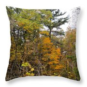 White Pine Hollow State Forest Throw Pillow