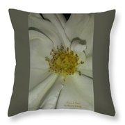 White Pinwheel Rose Throw Pillow