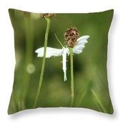 White Plume Moth, Throw Pillow