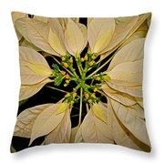 White Poinsettia Throw Pillow