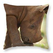 White Rhinoceros Ceratotherium Simum Throw Pillow by Matthias Breiter