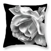 White Rose Aglow Throw Pillow