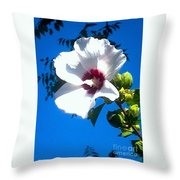White Rose Of Sharon Hanging Out In The Sky Throw Pillow
