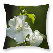 White Rose Of Sharon Squared Throw Pillow