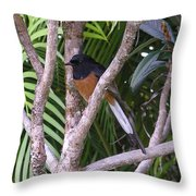 White Rumped Shama Throw Pillow