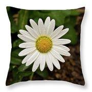 White Shasta Daisy In The Rain Throw Pillow