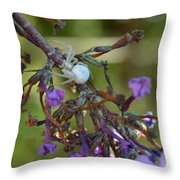 White Spider In Butterfly Bush Throw Pillow