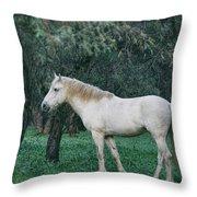 White Stallion In The Woods  Throw Pillow