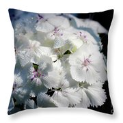 White sweet william flower cluster photograph by karen adams white sweet william flower cluster throw pillow mightylinksfo