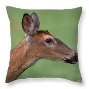 White Tail. Throw Pillow