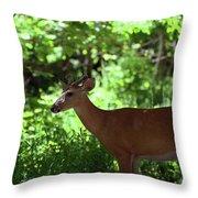 White Tailed Buck Throw Pillow