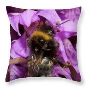 White-tailed Bumblebee On Southern Marsh Orchid Throw Pillow