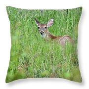 White-tailed Deer Bedded Down In Tall Grass Throw Pillow