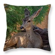 White-tailed Deer H1829 Throw Pillow
