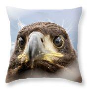 White-tailed Eagle #2 Throw Pillow