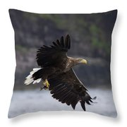 White-tailed Eagle Against Cliffs Throw Pillow