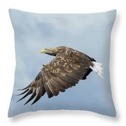 White-tailed Eagle Against Clouds Throw Pillow