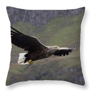 White-tailed Eagle Approaches Throw Pillow