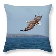White-tailed Eagle Over The Sea Throw Pillow
