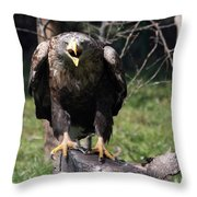 White Tailed Eagle Screaming Nature Wildlife Scene Throw Pillow