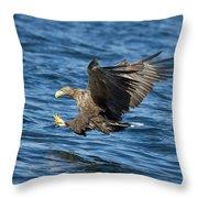 White-tailed Eagle Taking Fish Throw Pillow