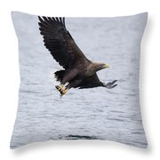 White-tailed Eagle With Catch Throw Pillow