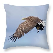 White-tailed Eagle With Lunch Throw Pillow