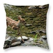 White-tailed Fawn At Vichy Springs Resort In Ukiah Throw Pillow