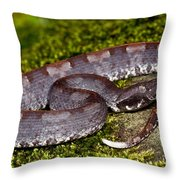 White-tailed Hognose Viper Throw Pillow