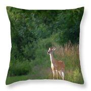 White Tailed Throw Pillow