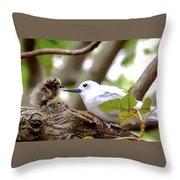 White Terns Koa And Parent...bird Love Throw Pillow