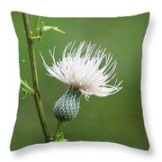 White Thistle Flower Throw Pillow