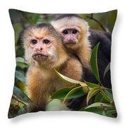 White-throated Capuchin Monkeys Cebus Throw Pillow