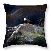 White-throated Dipper Nr 1 Throw Pillow