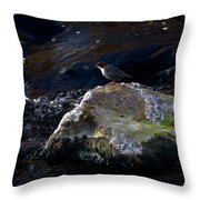 White-throated Dipper Nr 2 Throw Pillow