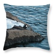 White-throated Dipper Nr 4 Throw Pillow