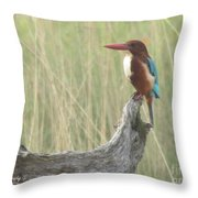 White Throated Kingfisher Throw Pillow