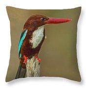 White-throated Kingfisher Throw Pillow